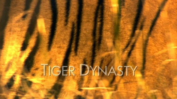 tiger main titles - tiger dynasty