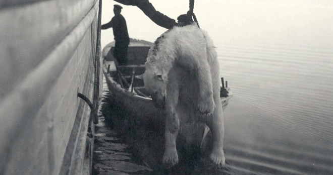 The Polar Bear Family and Me - Trapping