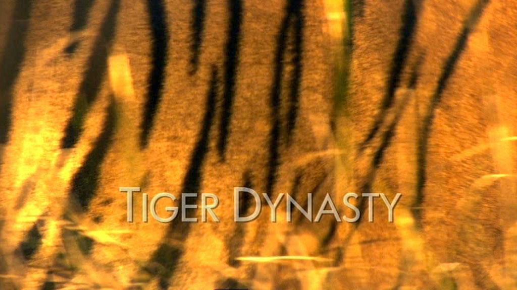 tiger main titles - tiger dynasty