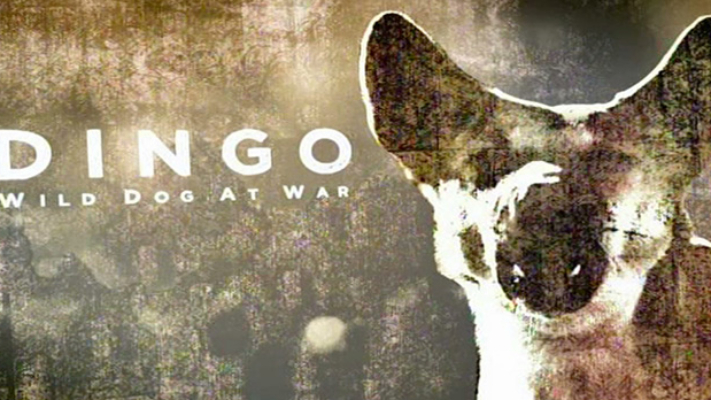 Dingo - Wild Dog at War