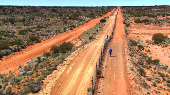 Dingo - Wild Dog at War - Dave and the fence