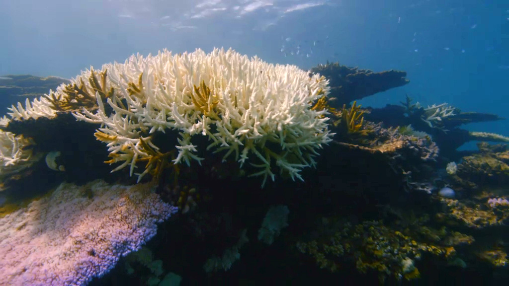 Can We Save The Reef